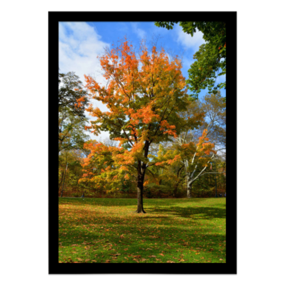 quadro decorativo central park new york